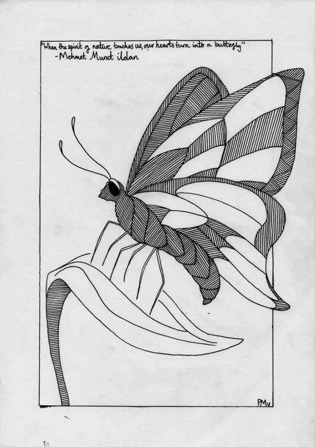 butterfly.jpeg